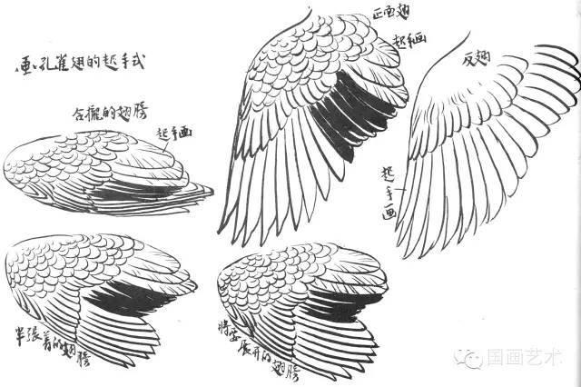 孙其峰 花鸟画谱 孔雀的画法