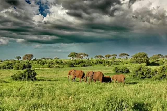 国庆坦桑尼亚7天6晚特惠线路,错过又要等一年!