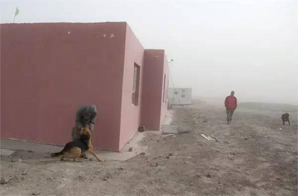 楼兰古城中,只剩下四个人和三条狗在坚守
