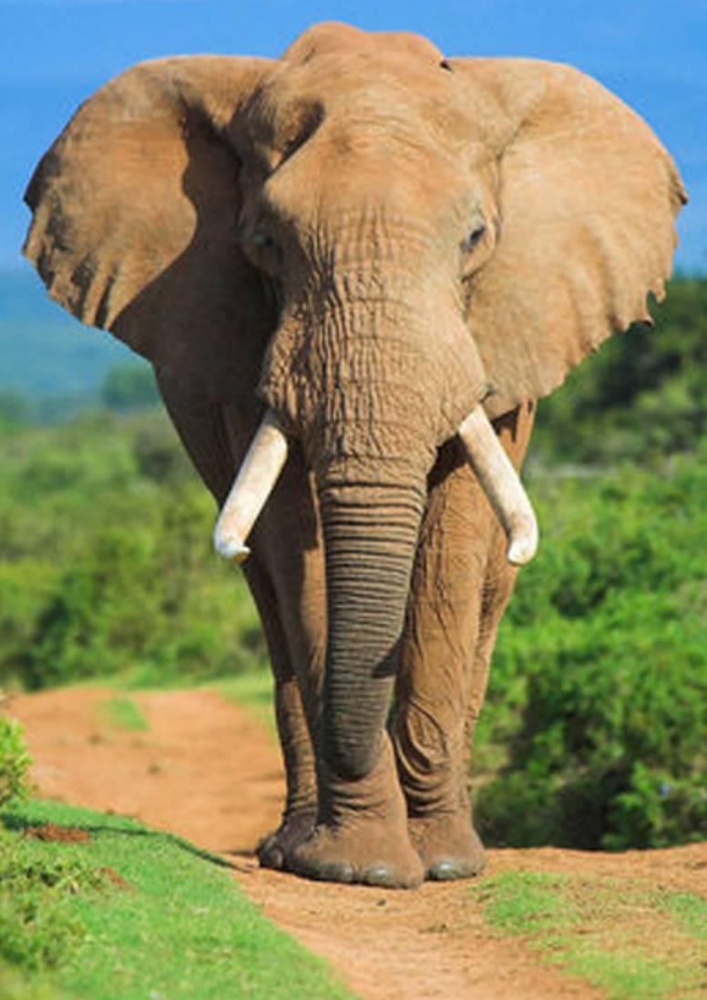 小象:额……好尴尬,都不过来扶一把……  是不是像极了小时候自己在