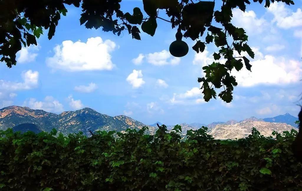 旅游 正文  距离比较近的两处风景区就是 大泽山风景区,茶山风景区 都