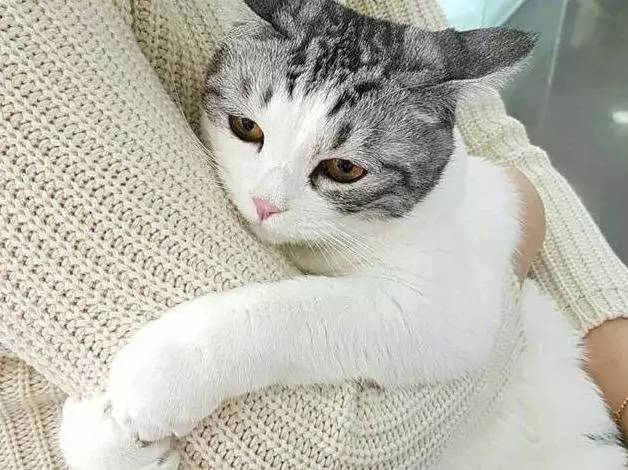 正文开始:  前不久家里的猫咪生病了,我就带着它去医院检查一下.