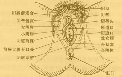人与动物的网站非洲象形人那么大的阴茎阴道_阴蒂 位于两侧小阴唇之间的顶端,类似男性的阴茎海绵体组织,阴蒂头有