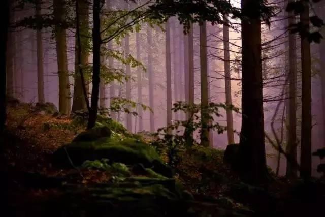 探寻巴伐利亚黑森林,解密schimmel钢琴独特音板的诞生图片