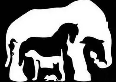 猜图几种动物_一张大象图片猜有几种动物?