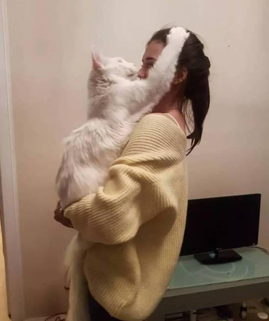 傲娇猫咪,一秒也不愿意离开主人的怀抱-玩意儿