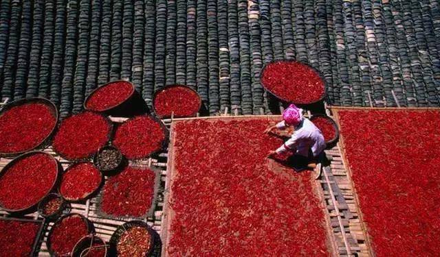 创意布贴画人物-吃辣椒的花样也特别多,除了烹调做作料外,还常单吃,剁椒酱更是家