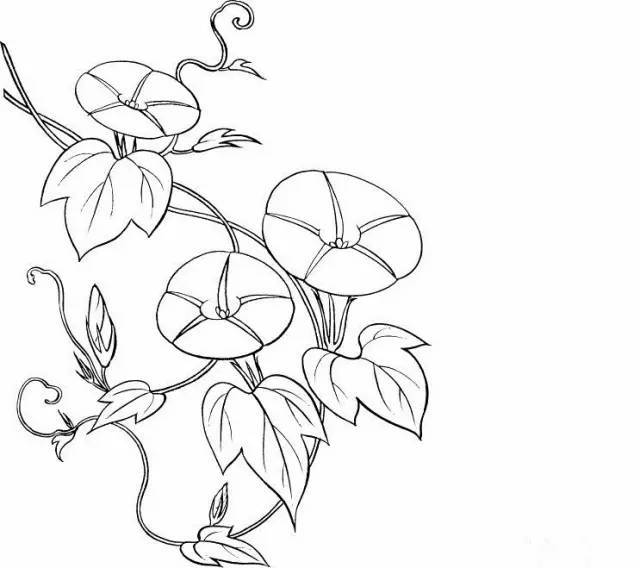 【简笔画】各种植物简笔画大全,可以直接涂色哦!(