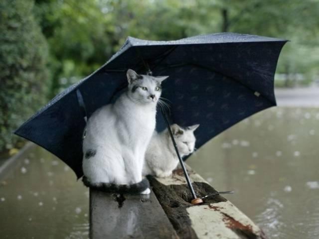 如果你发现流浪猫在躲雨,请不要驱赶他们
