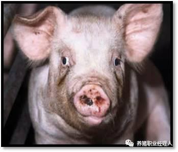 尸体解泡�_技术讲座|病猪尸体解剖的重要意义(2)