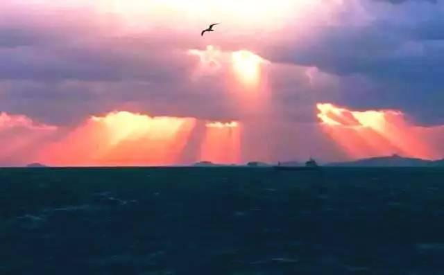 高尔基的《海燕》被中文字幕给玩坏了.方言都要雾中的眼泪大港刺猬图片