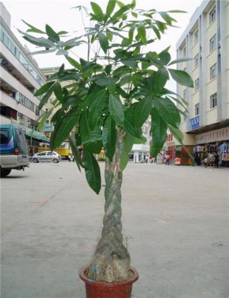 农村种植这10种树最能赚钱,亿万致殷商机就在你手里!