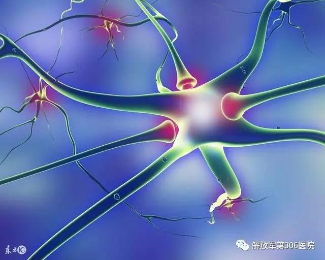 周围神经生物力学简介
