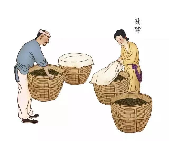 原创手绘 | 祁门红茶传统手工制作图解