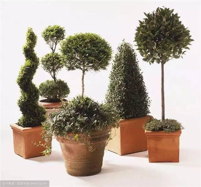 盆景 盆栽 植物 640_597图片