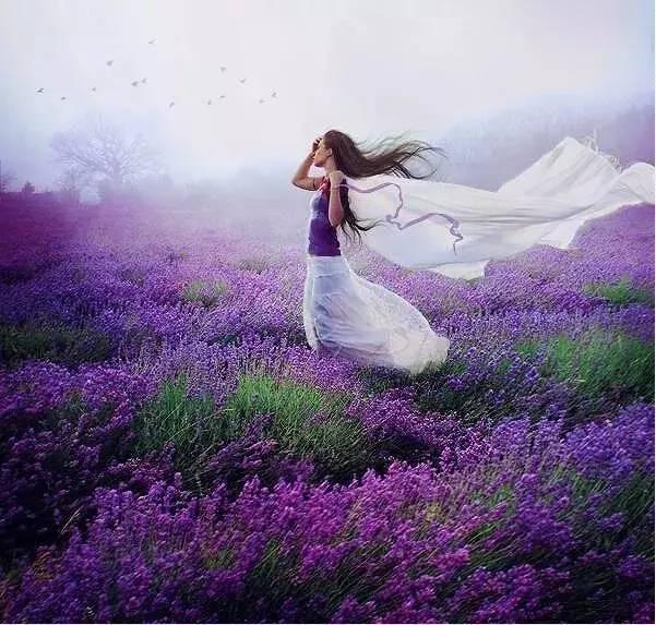 薰衣草:生活本不苦,是我们欲望过多;人心本无累,是放不下的太多.图片