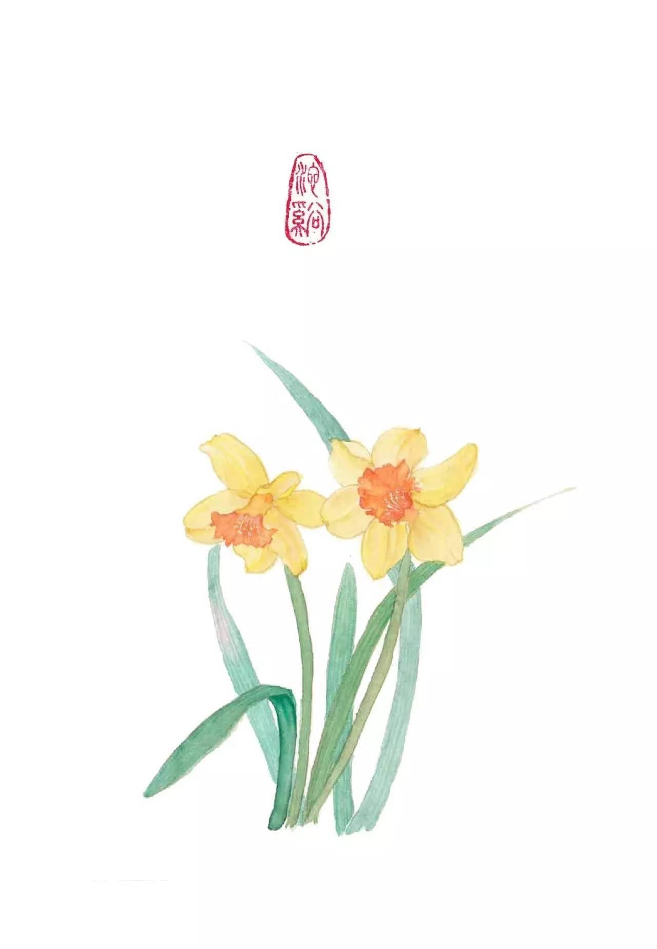 水彩教程 | 小清新水仙花~~ 黄水仙