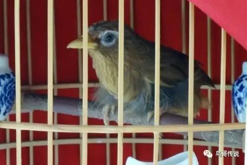 鸟叼信封手绘图