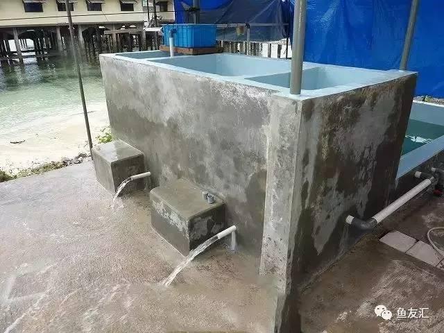花5700元建个15吨的鱼池,这哥们真牛!图片