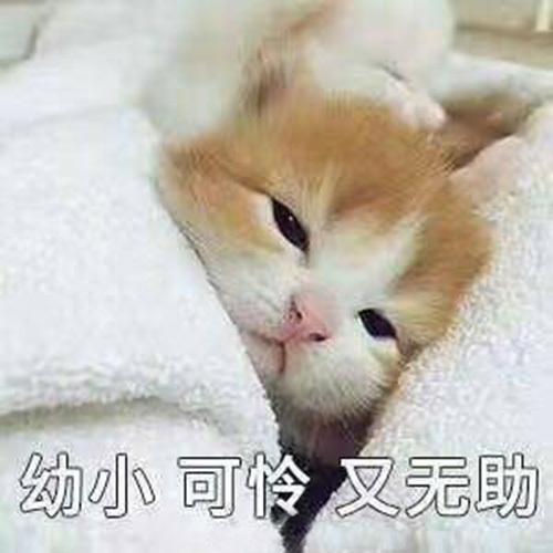 GPI电子:王俊凯北影报道走低调风_开学季明星鲜肉小花都会穿这样