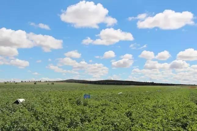化肥资讯网_【学科资讯】化肥面源污染农田综合治理技术2017中期