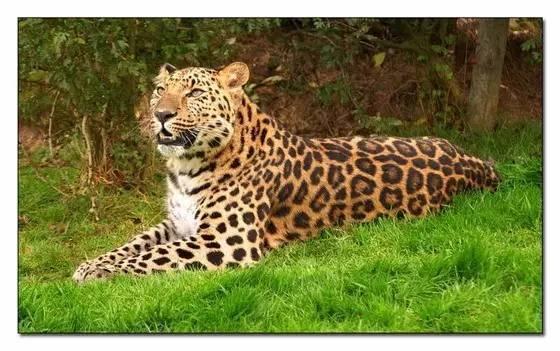 东北虎豹国家公园标识有奖征集投稿倒计时,咱吉林人快图片