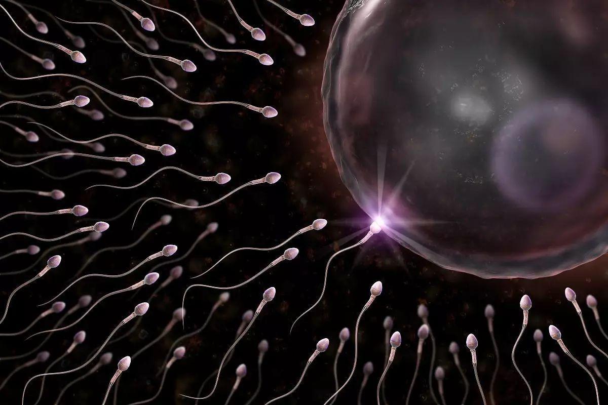 跷二郎腿时,影响图片周围的男性感染,此时就生殖皮肤温度的精子与病毒性器官数量小朋友升高图片