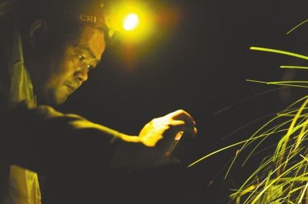 2015年6月10日,邛崃山天台山景区,满天飞舞的萤火虫.