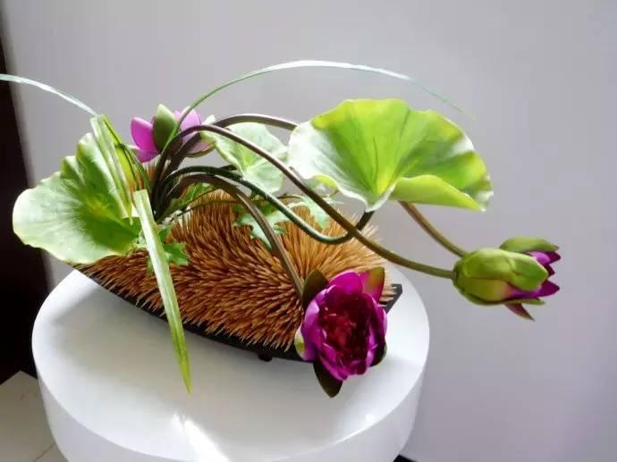 (图解)碗莲种子的详细种植方法!喜欢的收了吧