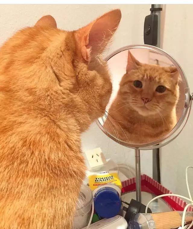橘猫太胖,主人想让它减肥,可看那猫脸一点不胖,也就算