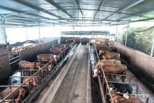 养牛场建设费用,建牛舍一平方米需要多少钱?