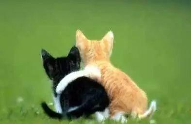围绕突出小动物外形和动作特点,欣赏,点评学生习作. 2.