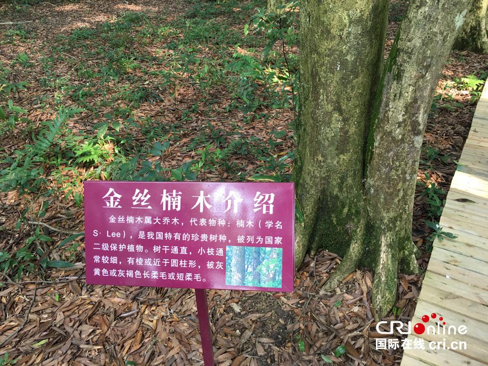 在中国的江汉、洞庭湖、鄱阳湖三大平原之间,存在着一个神奇的生态绿岛九岭山脉。江西宜丰就位于九岭山脉的南麓。这里气候温润,雨水充沛,土壤肥沃,森林覆盖率高达71.9%。是中国竹子之乡国家级生态县。 近日,参加美丽中国江西样板与生态文明建设宜丰实验基地考察活动的部分专家学者在江西省林业部门和当地领导陪同下,专场前往宜丰县花桥、桥西、双峰等地实地考察新近发现的一批金丝楠木古建筑和数量惊人的多片金丝楠木古树群。 在花桥白市,参观了始建于唐咸亨四年(公元673年)、极有可能改变中国乃至亚洲木结构建筑编
