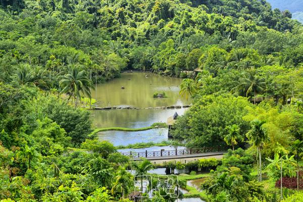 海南岛热带雨林_距离三亚35公里一座神奇的热带雨林竟被称为海南岛的香格里拉!
