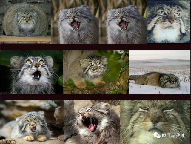 野生动物园 | 努力做一座高原上的良心动物园