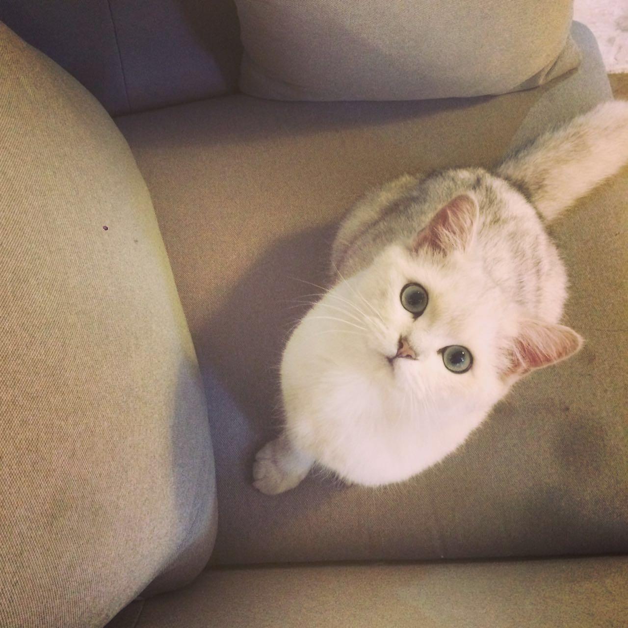 妻人撸_沙坡尾撸猫手册