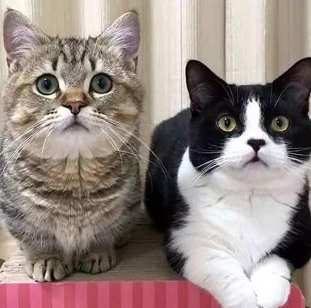 腿短让人忧伤,猫的小短腿让人疯狂!