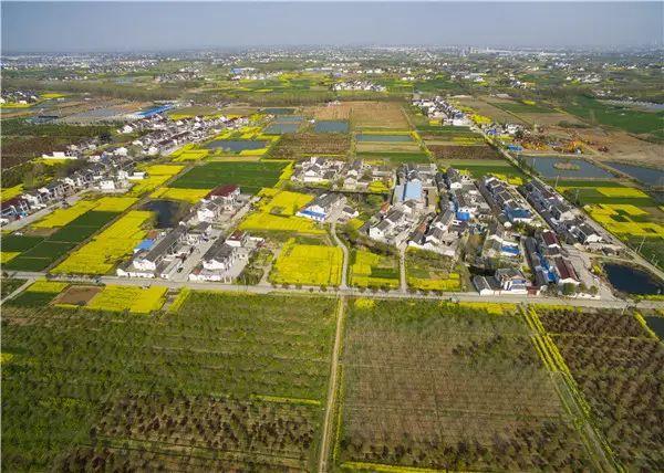 扬州人均耕地_扬州炒饭图片