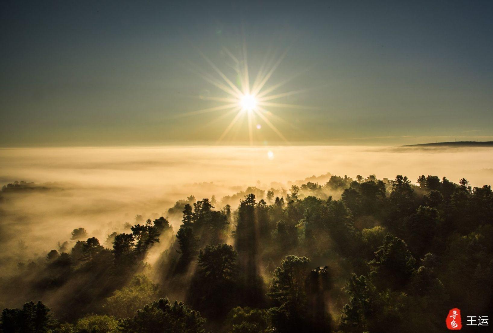 五营--大森林的清晨图片