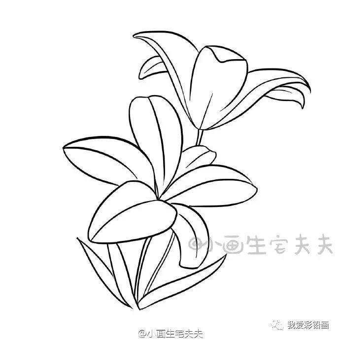 【教师节,送一朵手绘小花 】简笔百合花的画法