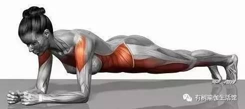 【有树瑜伽】joe 康复理疗深度工作坊 | 10月1日-4日图片