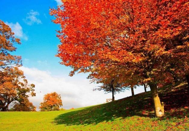 文化 正文  秋意渐浓, 走在铺满落叶的路上, 沐浴着温和的光影, 眼见