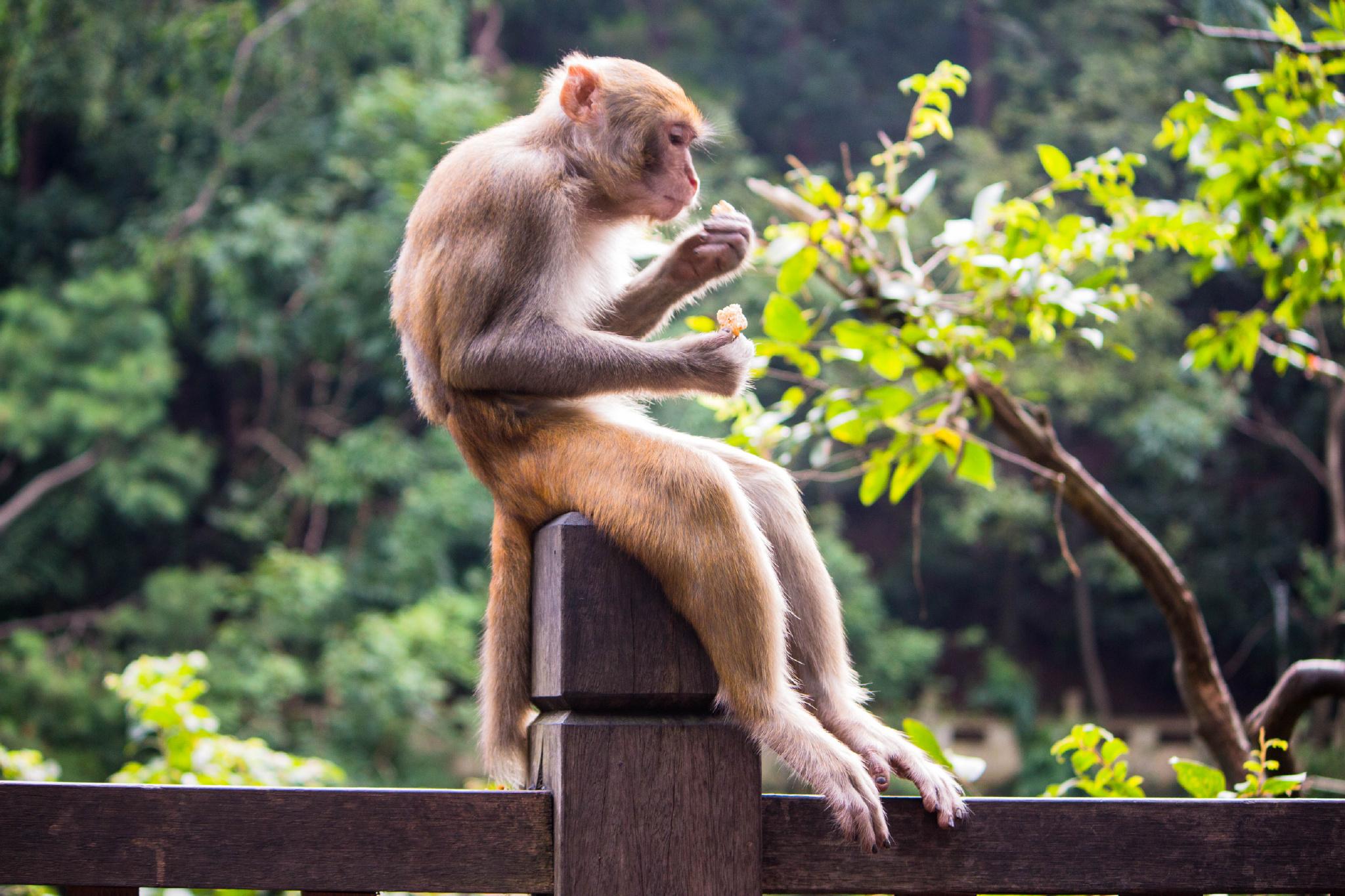 移除 摄影/游走旅行的摄影人   公园幽静的山谷里建有动物园,清泉