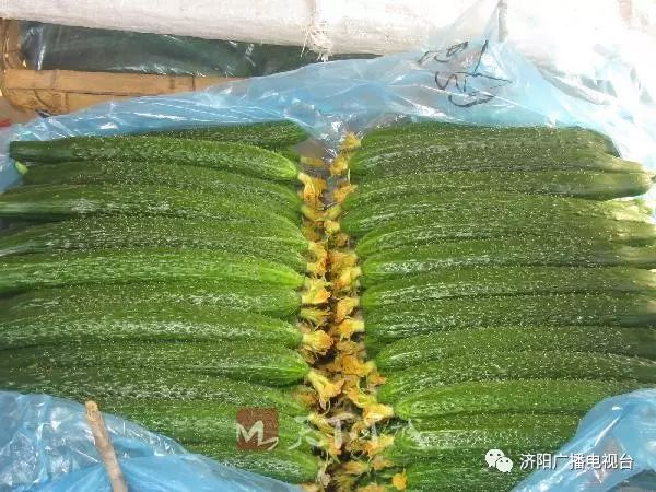 摘满一筐后,笔者同刘乐全一起赶到了曲堤镇黄瓜交易市场.图片