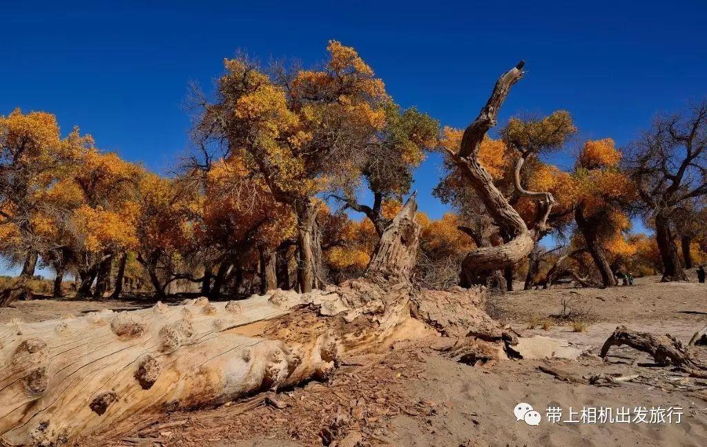 国内这8个国家级公园 藏着世界级的美景