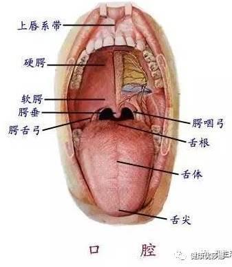 陰部 潰瘍