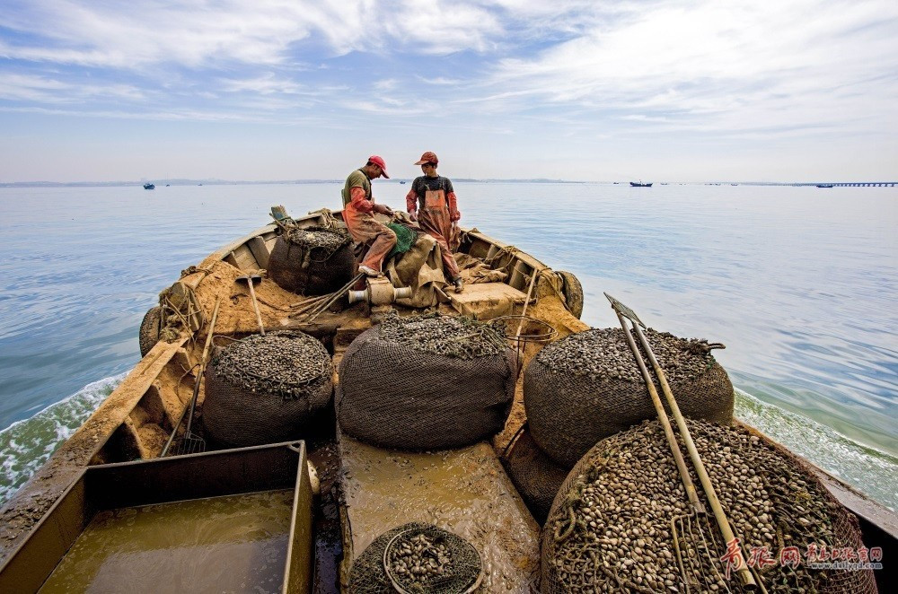 社会 正文  这是挖蛤蜊最核心的地方:活蛤蜊在水里能漂浮,而死蛤蜊与