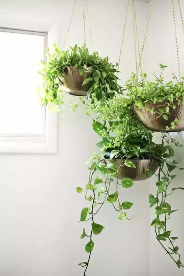 仿真 仿真花 仿真植物 盆景 盆栽 植物 装饰 600_900 竖版 竖屏
