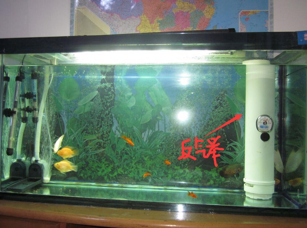 這2天自己動手做了個魚缸魚糞便過濾器,不知道行不行,先用上.圖片