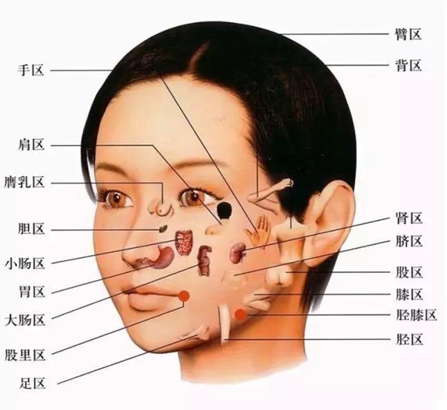 女人体穴位高清图_医用五脏器官位置图_医用五脏器官位置图画法